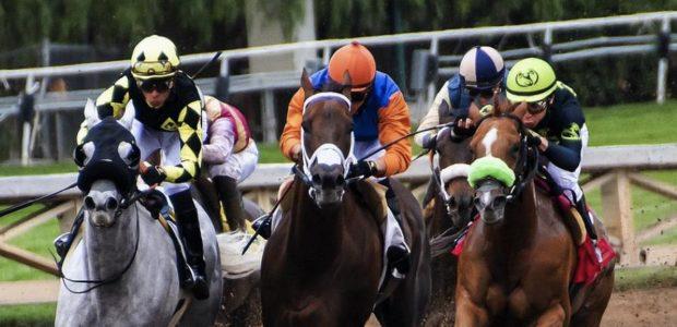 Pferderennen und Sportwetten/ Quelle: Pixabay, lizenezfreie Bilder, open library: https://pixabay.com/de/pferde-rennsport-rennen-pferd-tier-3811270/