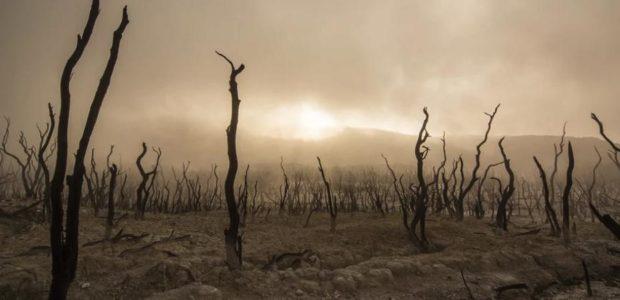 Klimakatastrophe? / Quelle: Pixaybay, linzenzfreie Bilder, open library: https://pixabay.com/de/photos/abgestorbene-b%C3%A4ume-trocken-verlassen-947331/
