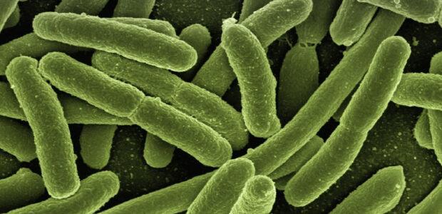 Lebensmittelvergiftung durch Kolibakterien / Quelle: Pixabay, lizenzfreie Bilder, open library; geralt:https://pixabay.com/de/photos/koli-bakterien-escherichia-coli-123081/